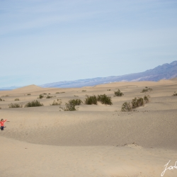 Paula Mesquite Dunes